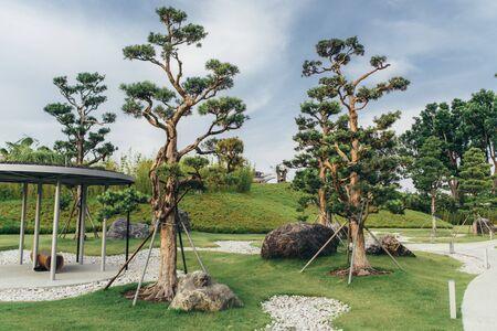 Public green park, landscape design, beautiful view of landscaped garden.