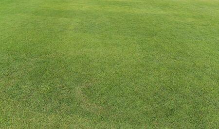 Champ de texture d'herbe verte fraîche. Arrière-plan