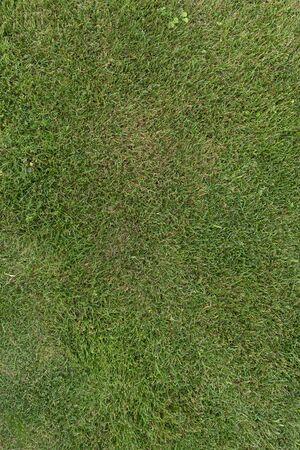 Green grass texture background top view