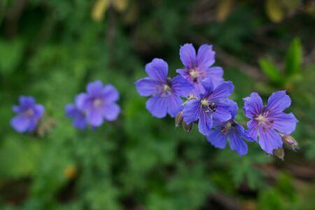 Flowers blooming in the forest Zdjęcie Seryjne
