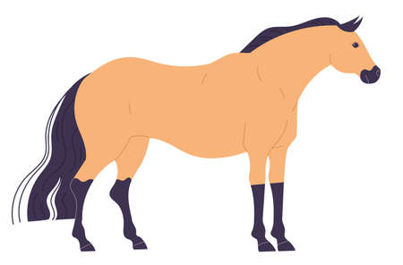 Calm, standing straight, light colored horse with dark legs and mane.