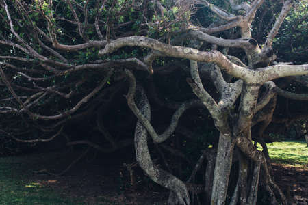 Tree with intertwining dense branches