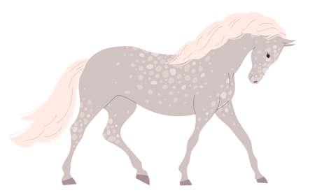 Gray light horse with many small spots.
