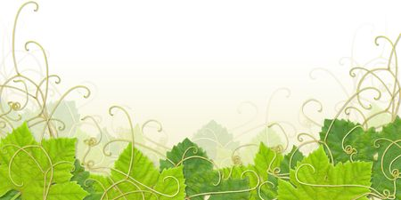 Grape leaves composite with paths - useful as footer or frame Stock Photo