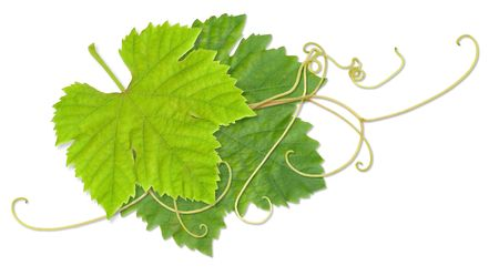 Grape leaves composite with path Stock Photo