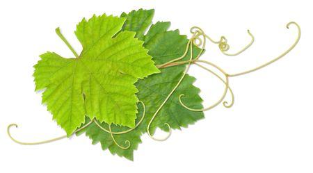 aotearoa: Grape leaves composite with path Stock Photo
