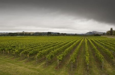 Rainclouds roll over a vineyard in Hawkes Bay, New Zealand Stock Photo