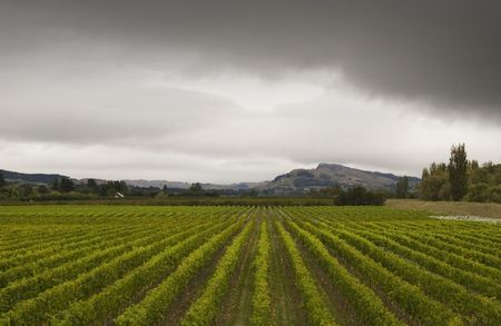 rainclouds: Rainclouds roll over a vineyard in Hawkes Bay, New Zealand Stock Photo