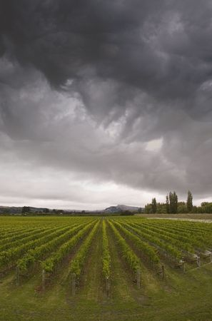Rainclouds roll over a vineyard in Hawke's Bay, New Zealand Stock Photo - 2567545
