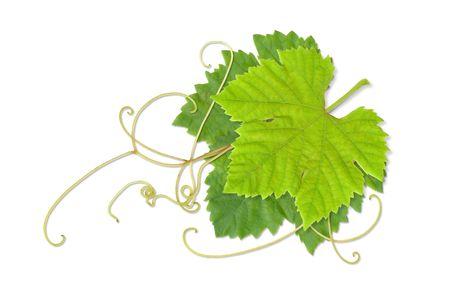 Grape leaves composite Stock Photo