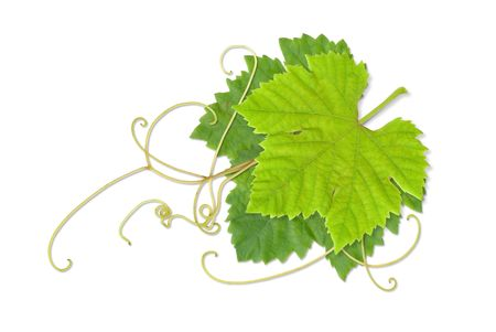Grape leaves composite Stock Photo