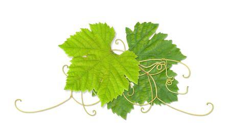 Grape leaves composite Stock Photo - 2567430