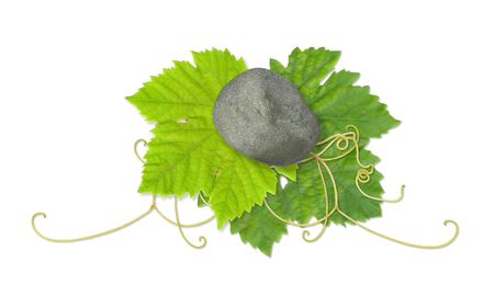 Grape leaves composite Stock Photo - 2567463