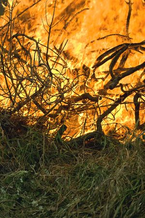 intensity: Grass and branches burn with intensity