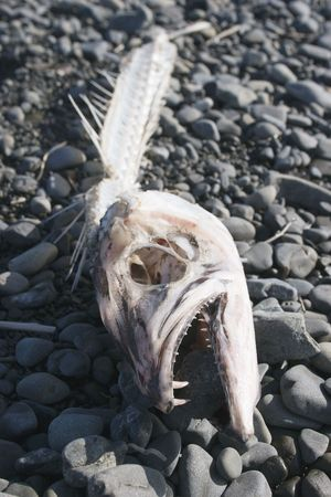 aotearoa: A fish discarded its skeleton and left it on the beach Stock Photo