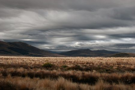 insipid: Tussock land of the Cenral Plateau of the North Island, New Zealand Stock Photo