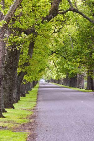 grass verge: Una quercia strada fiancheggiata a Hastings, Hawke's Bay, Nuova Zelanda.
