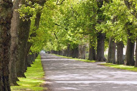 grass verge: Una quercia foderato road a Hastings, Bay, Nuova Zelanda di Hawke Archivio Fotografico
