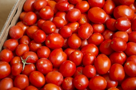 tomatoes in a box photo