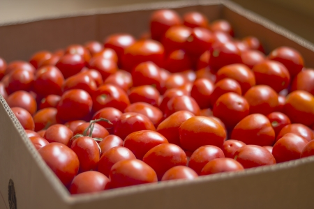 tomatoes in a box Stock Photo - 14728382