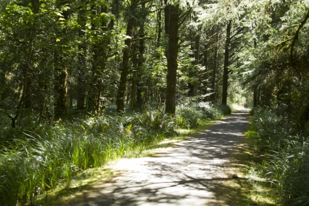 bike path running through an evergreen moss covered forest with shafts of sunlight photo