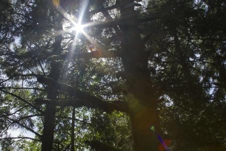 breaking through: La luz del sol se rompe a trav�s del dosel de un bosque