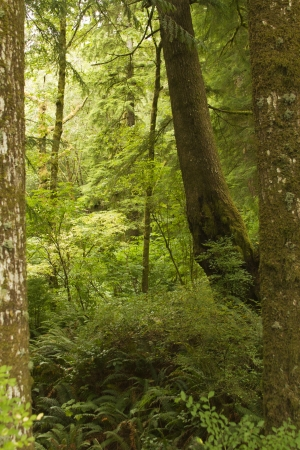 The undergrowth of an old growth forest