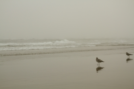 Foggy Day at the Beach with two seagulls walking in the foreground 版權商用圖片 - 23218460