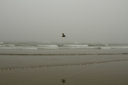 Foggy Day at the Beach with a seagull flying over the waves