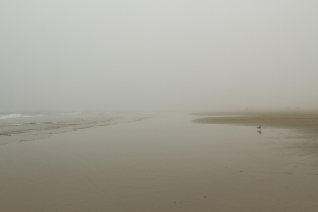 Foggy Day at the Beach with a seagull in the foreground and the shapes of people in the distance