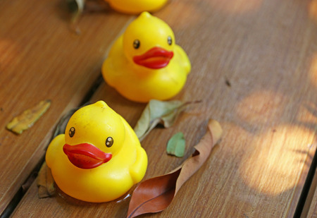 Yellow Rubber Duck In The Garden Stock Photo, Picture And Royalty ...