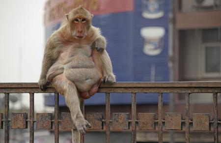 Monkey sitting on fence in city Stock Photo