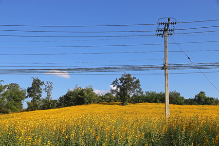 Electric Power Lines crossover flower field at countryside of Thailand Stock Photo