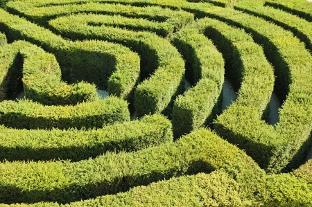 hedge plant: Find the way out from the labyrinth.