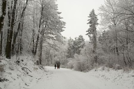 hoary: Winter trip trough the snowy and hoary forest. Stock Photo