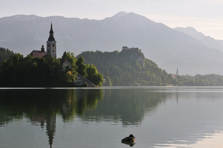 Bled lake with the church on island and Castle, Slovenia, Europe. Early morning photo with duck. photo
