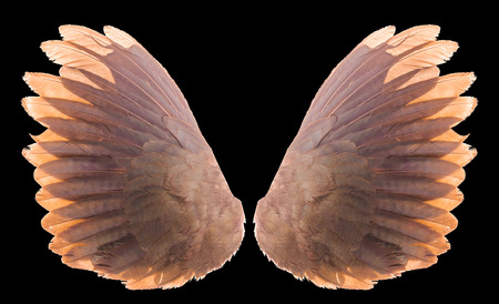 brown wing isolated Stock Photo