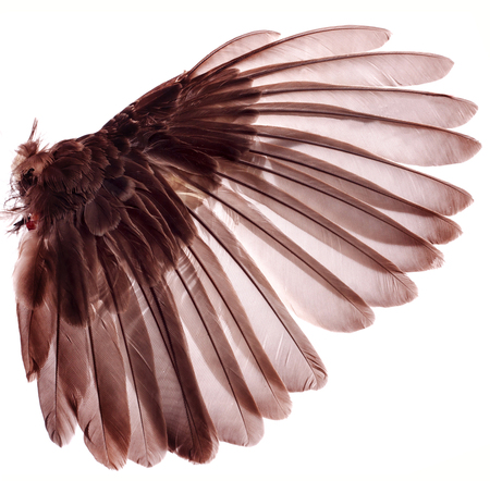 wings of birds on white background Stock Photo