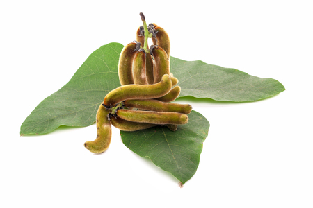 nettles brown pods with on white background(Mucuna pruriens).