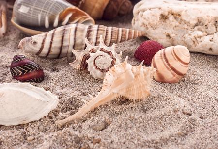 Sea shell on white background Stok Fotoğraf