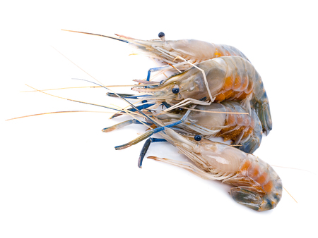 Fresh shrimp isolated on white background. This has clipping path. Standard-Bild