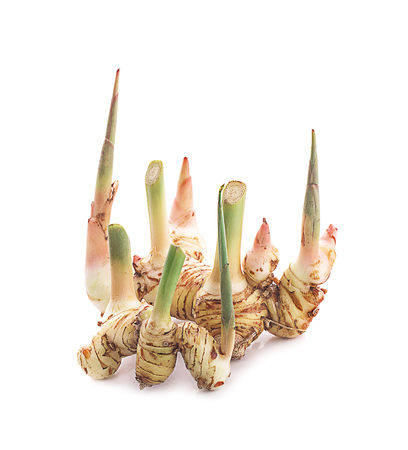 Greater galangal isolated on the white background Stock Photo