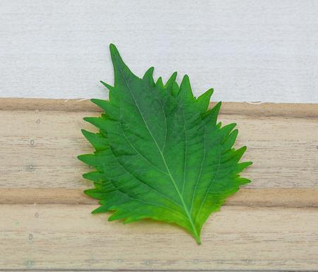 fresh green shiso leaf on white background Stock fotó