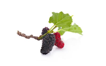 moerbeien fruit en moerbeiblad op witte achtergrond gezonde moerbei fruit eten geïsoleerd