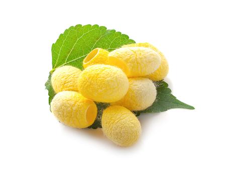 yellow thai silkworm cocoons pile isolated on white background. Stockfoto