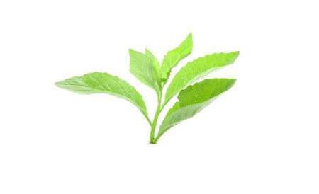 Fresh green leaf on white background