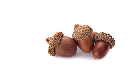 acorns on a white background ,close up 写真素材