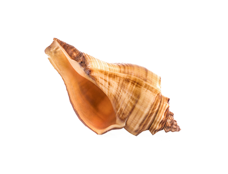 Sea shell on white background 写真素材 - 125710522