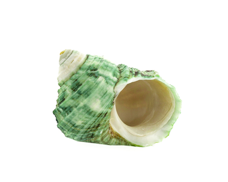 Sea shell on white background 写真素材 - 125710529