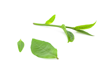 Green tea leaf isolated on white background 写真素材 - 125710601